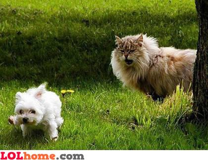 Cat bigger than dog