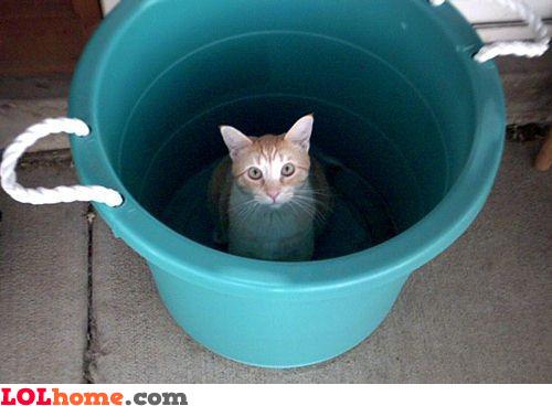 Kitten in the bucket