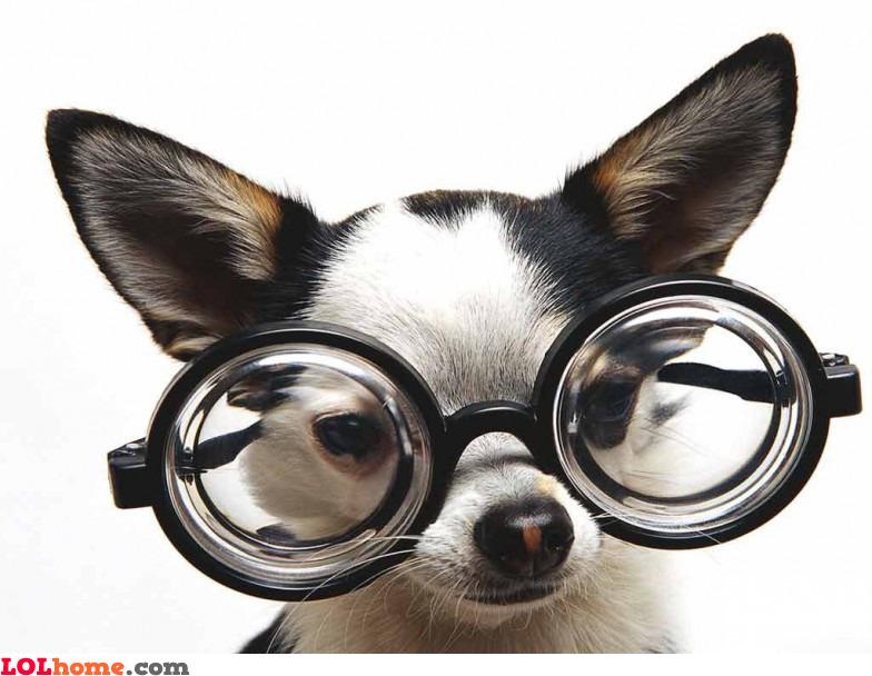 Einstein's dog