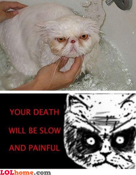 Washing cat