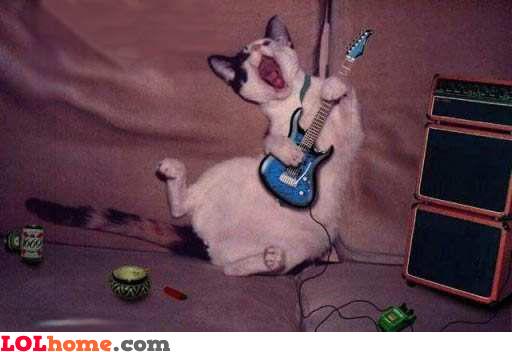 rockin' cat