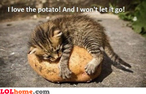 Cat loving potato