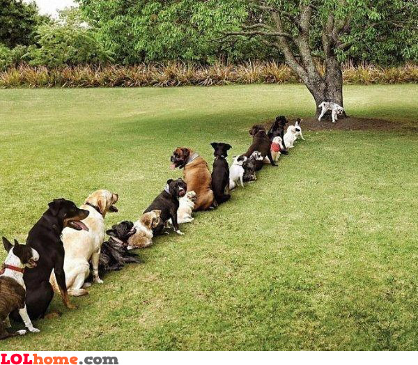 Dogs waiting to pee
