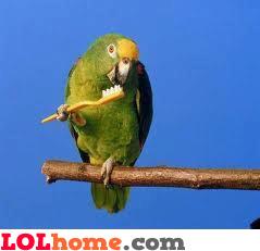 Parrot brushing his teeth