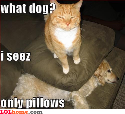 Cat trolling dog