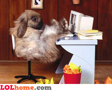 The Rabbit Boss
