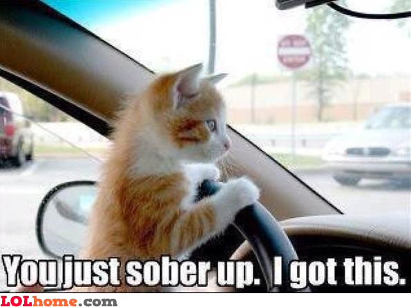 funny cats driving cars