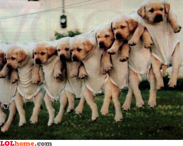 dogs on clothesline