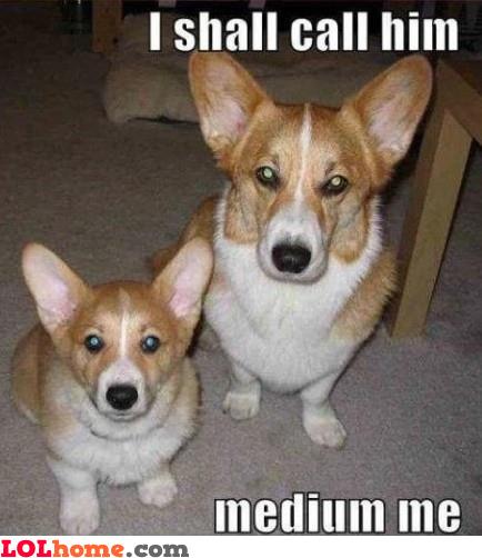 Medium me, the dog