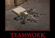 Mice Teamwork