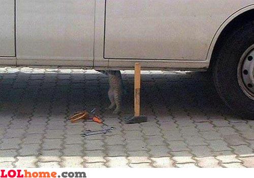 Cat repairing car