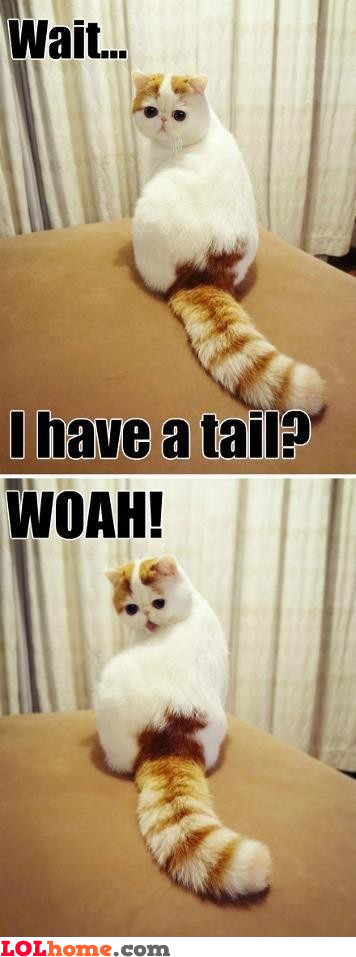 Having a tail