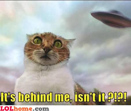 Spaceship behind cat