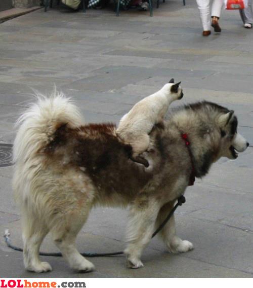Go dog, go!