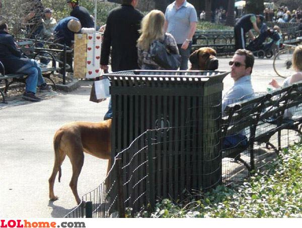 Dog or girafa?
