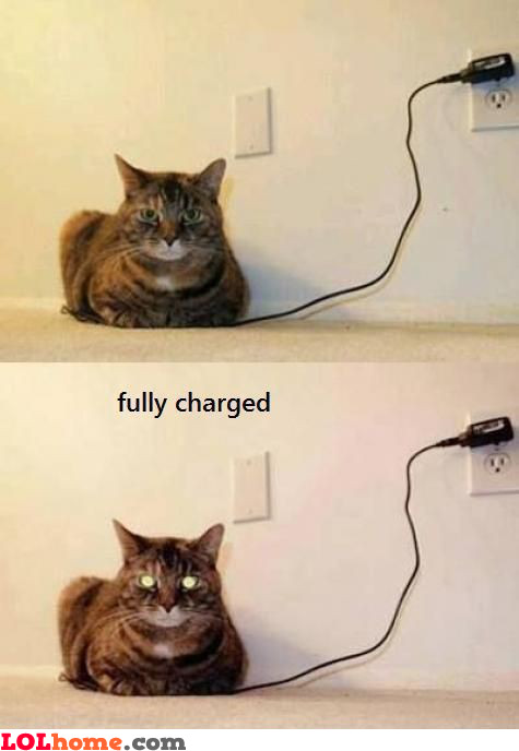 Fully charged cat