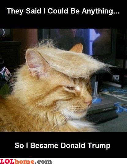 Donald Trump Cat