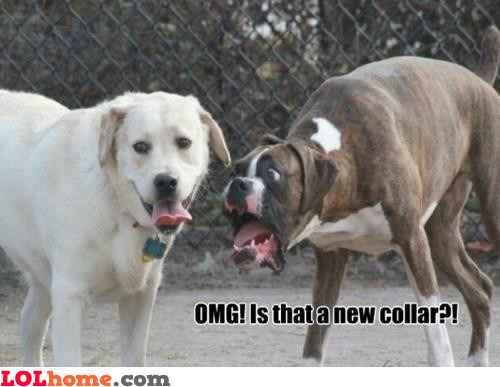 New collar