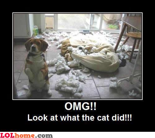 It's the cat's fault!