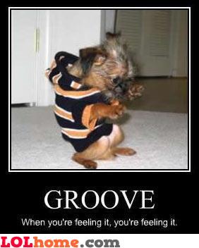 Dog loves groove