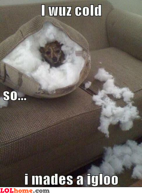 Dog in a igloo