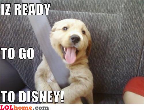 Puppy goes to Disneyland