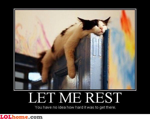Cat's resting
