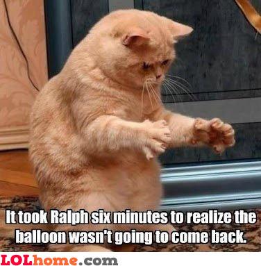Ralphie the Cat