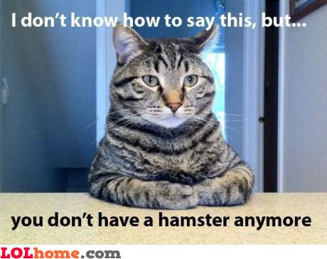 Hamster is gone