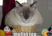 Cat muffin top
