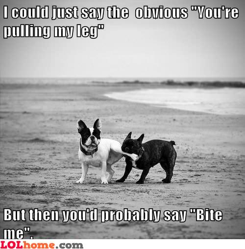 Dog is pulling my leg
