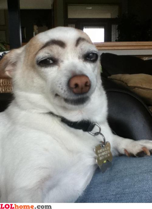 Dog's eyebrows