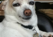 Dog's eyebrows