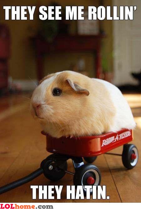 Hamster's rollin'