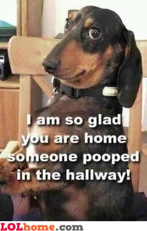 Dog has some news