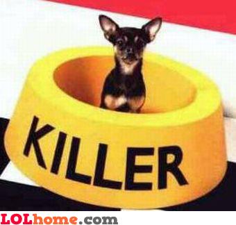 killer dog
