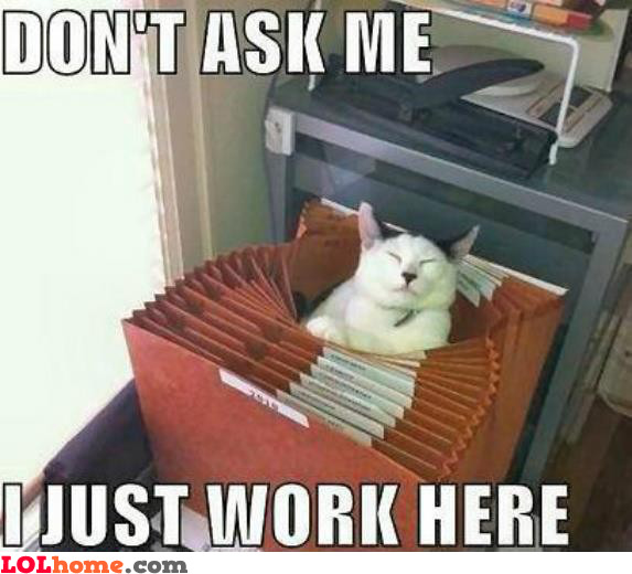 Cat works here