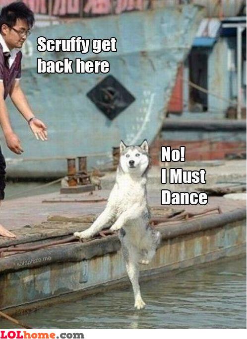 Scruffy is a dancer!
