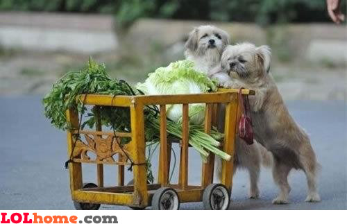 Dogs went shopping