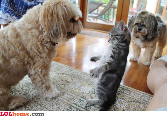 Imma slap you!
