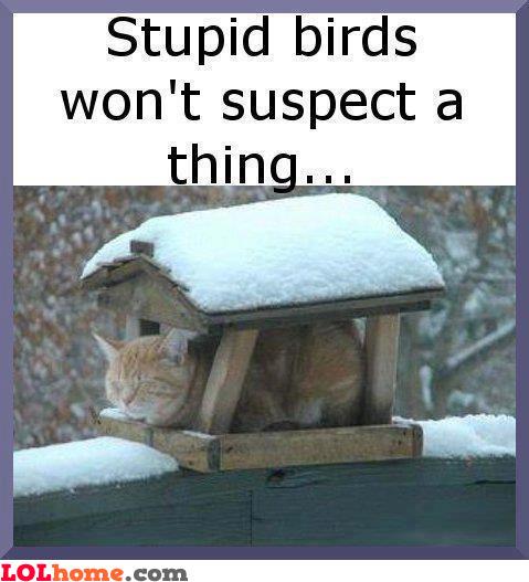 Stupid Birds