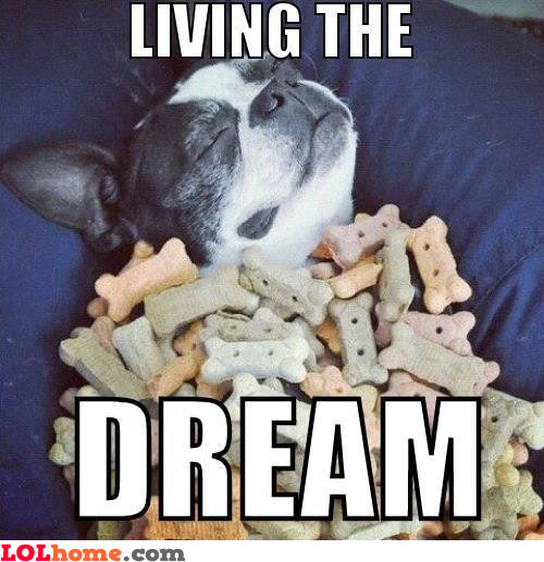 The dog dream