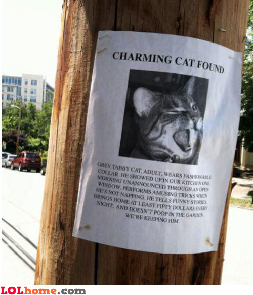 Charming Cat Found