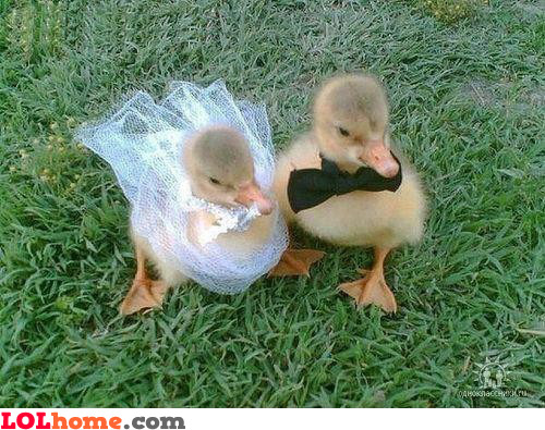 Duck wedding