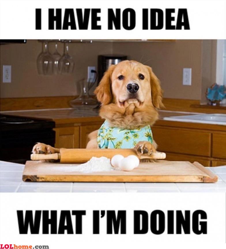 Cooking dog