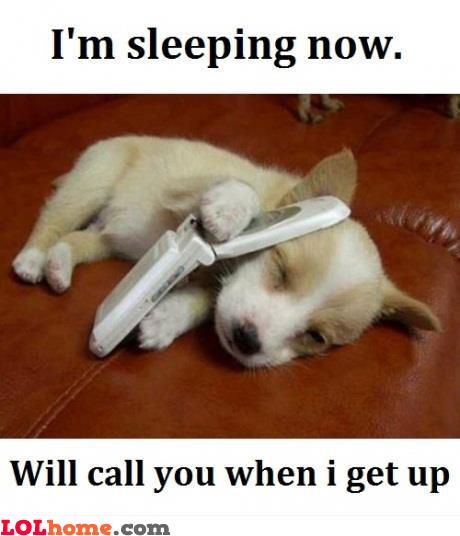 Funny Sleepy Meme : Sleepy dog funny pic