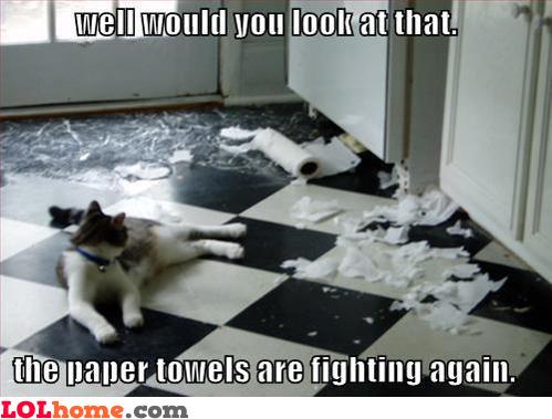 Paper towels war