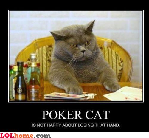 Poker Cat