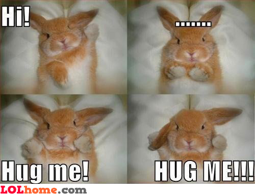 Hug the rabbit