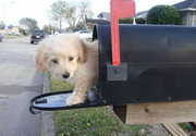 Dog in the mailbox